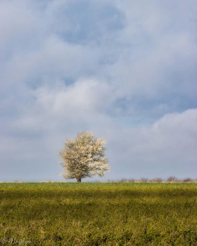 Foråret er ved at indfinde sig i Kappendrup - Nordfyn